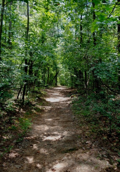 Dark trail in the woods at the Chattahoochee River